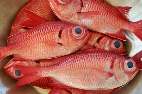 Mercury poisoning why consuming fish can be toxic to your for Why fish is bad for you